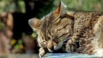 cat_sleep_01[1]