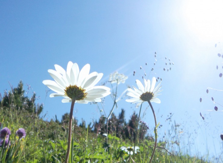 flower_01[1]