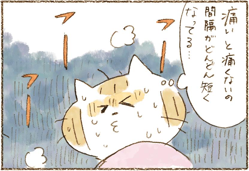 neko11-32