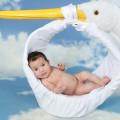 stork-1584755